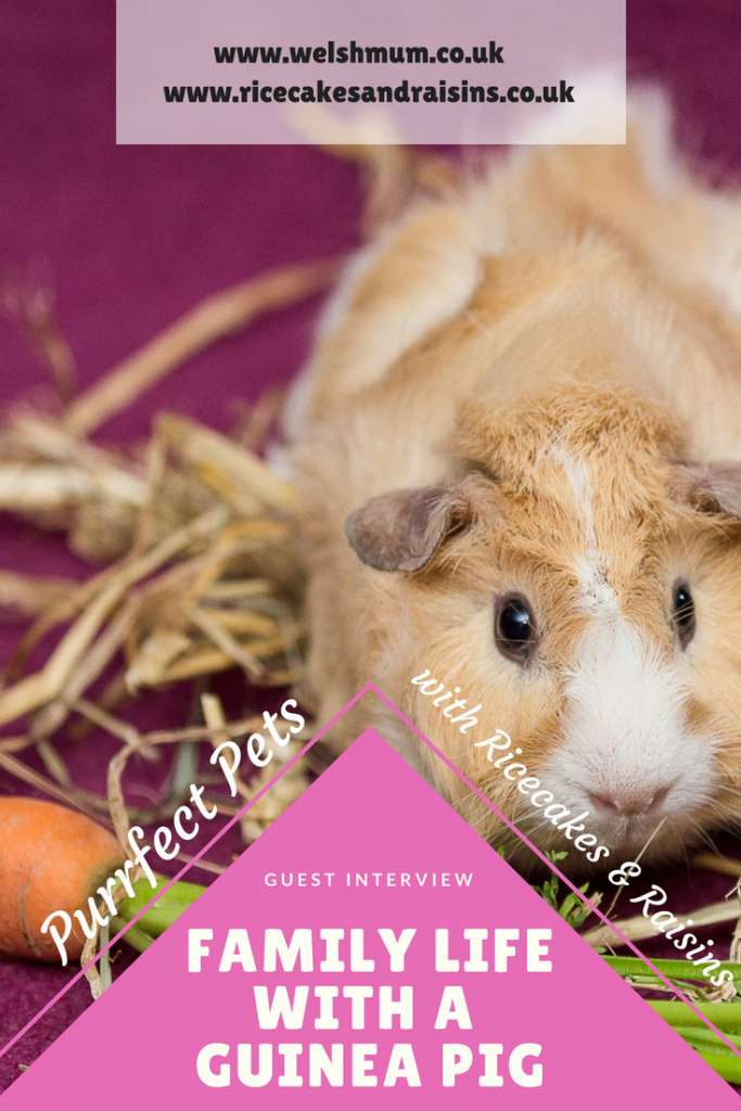 Welsh Mum interviews Ricecakes & Raisins about her family life with a guinea pig!