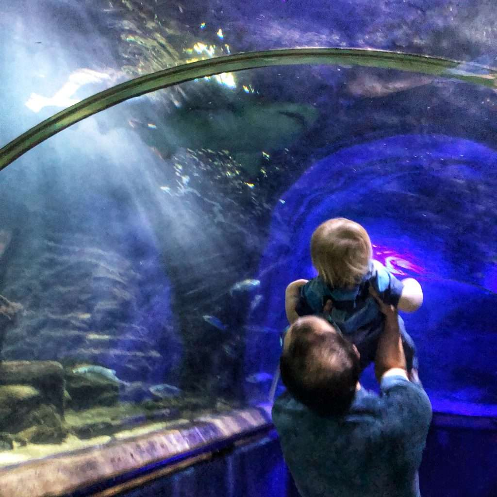 Deep Sea World Review - sharks, fish, amphibians and more in this aquarium located near Edinburgh, Fife.