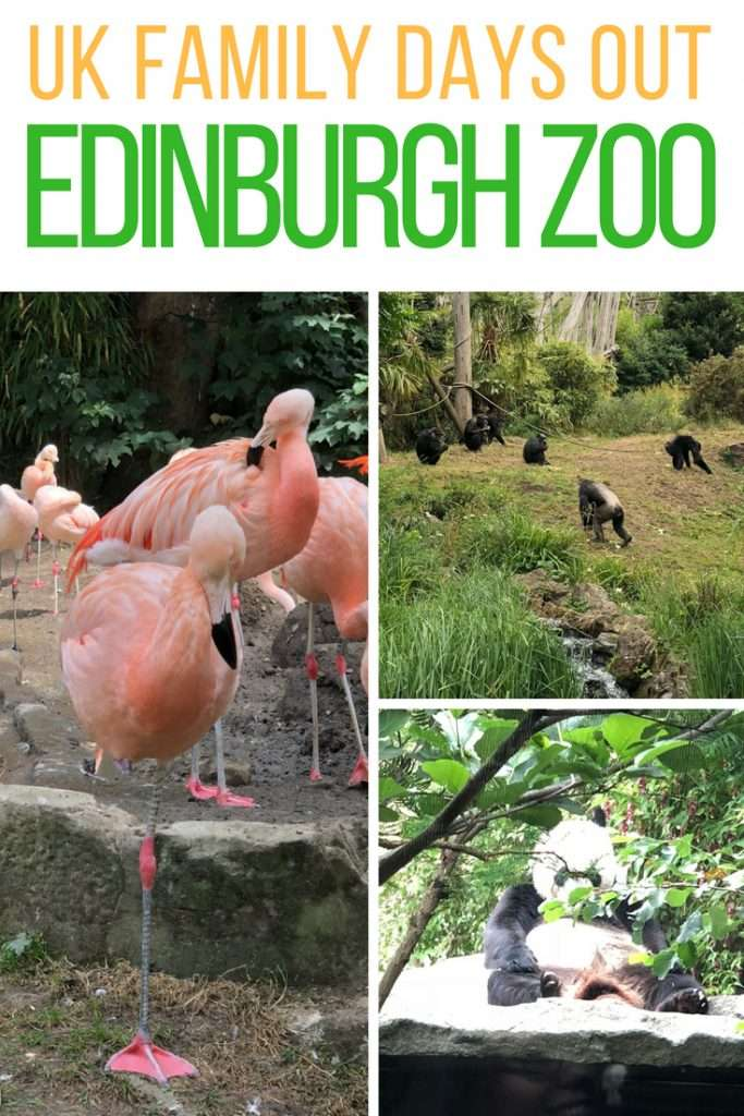 Edinburgh Zoo is a fantastic family day out with some amazing animals to see. Check out our review of a day at Edinburgh Zoo with a toddler!