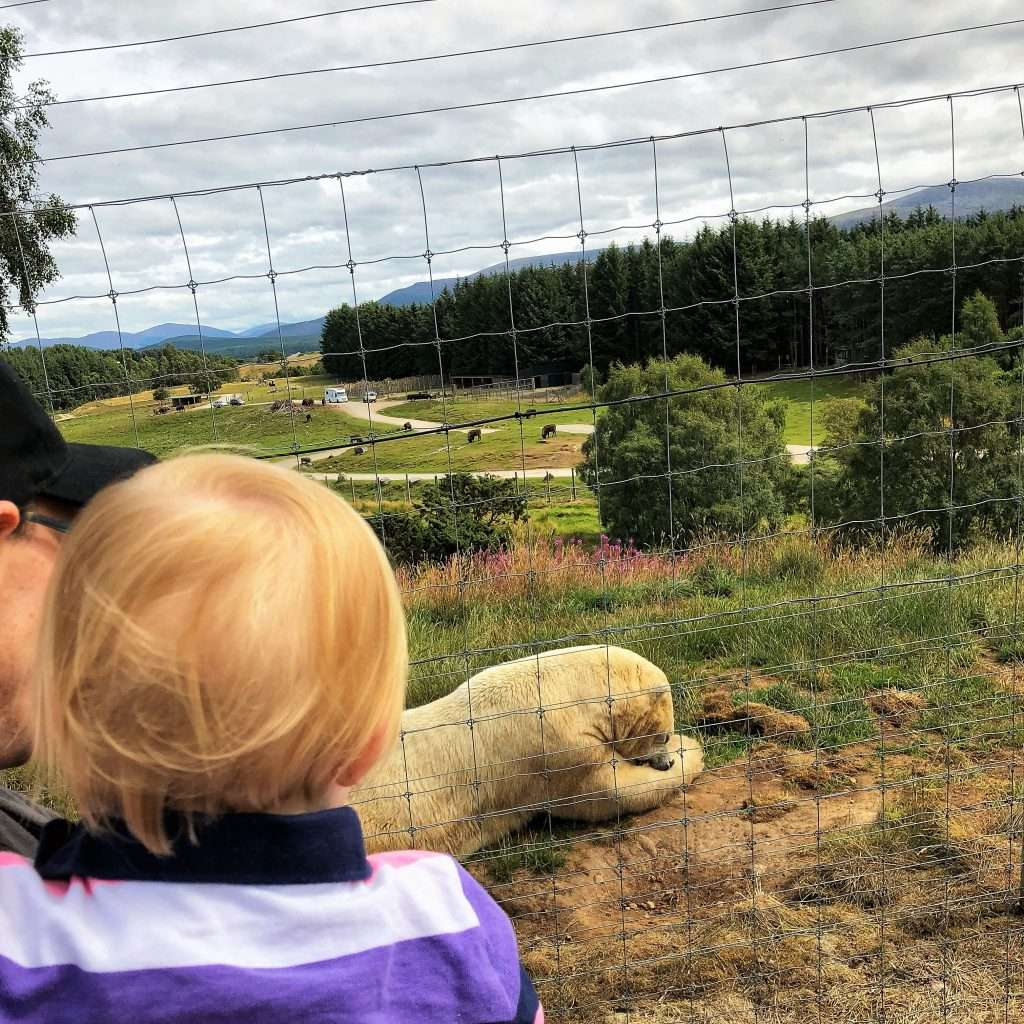 All the details you need in this review of a family day out at ZSS Highland Wildlife Park in the Scottish Highlands. A fabulous family day out in Scotland!
