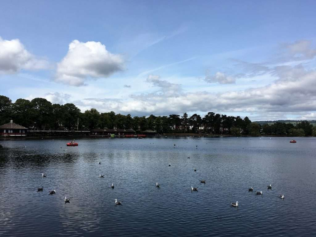 View over roath park lake with lots of seagulls and several paddle boats in the water