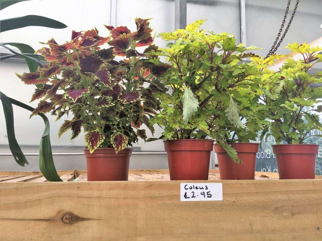 Plants for sale on a shelf