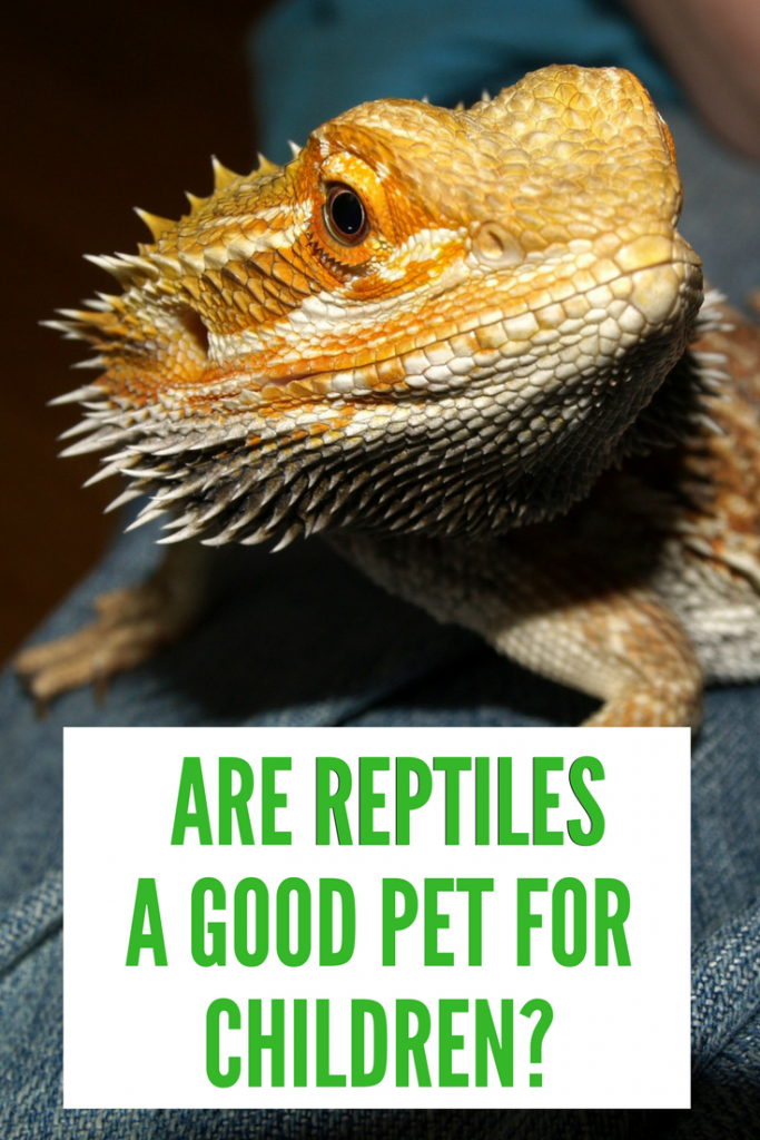 Are reptiles a good pet for children? How will they fit into a family? This post helps those thinking of adding an exotic pet such as a snake, lizard or tortoise to their family.