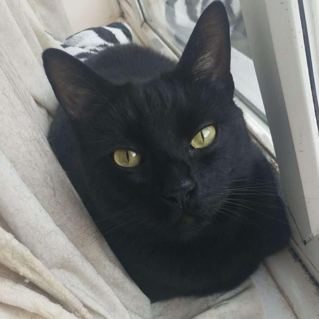 A black cat on a window ledge