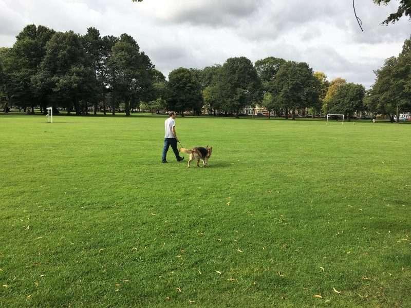 Ben walking Skye (German Shepherd) over large field