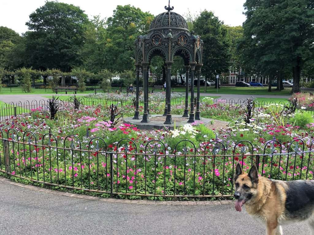 Skye (German Shepherd) surrounded by flowers.
