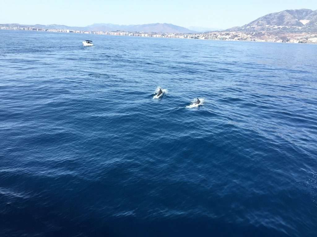 A pod of dolphins cresting the wave with a beach, houses and mountain in the far distance.