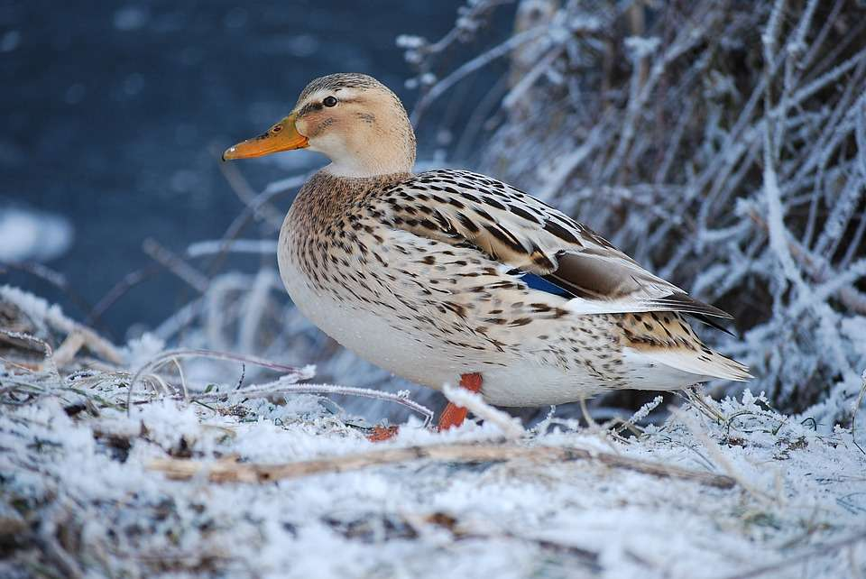 These 10 outdoor winter activities are suitable for the whole family, from toddlers to teenagers. There's loads of fun to be had so don't let a bit of rain, mud and snow keep you cooped up indoors - Duck feeding.