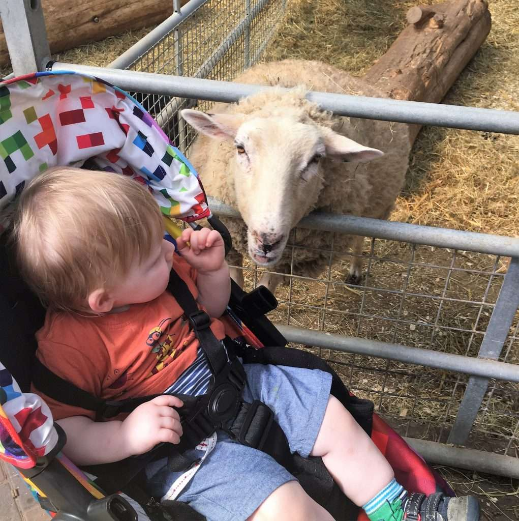 A review of Cefn Mably Farm Park - a fantastic family farm with large soft play.