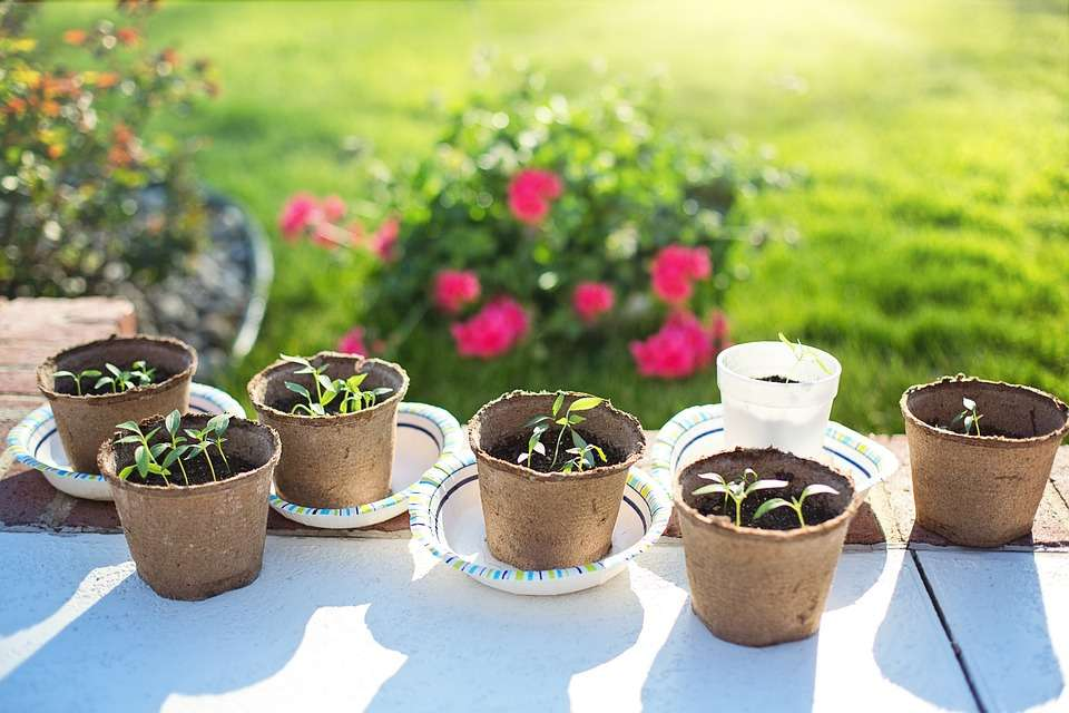 Seedlings in biodegradable pots make an excellent eco-friendly party bag gift.