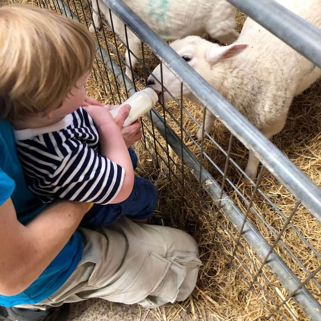 Raglan Farm Park Review - Feeding the lambs